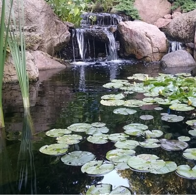 Call us 888 713 7771 discount pond supplies service for Pond building supplies